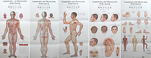 Acupuncture Points Charts (English-Chinese)