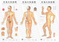 Acupuncture Point Wall Chart (Male)