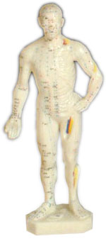 Acupuncture Human Body Model 26cm