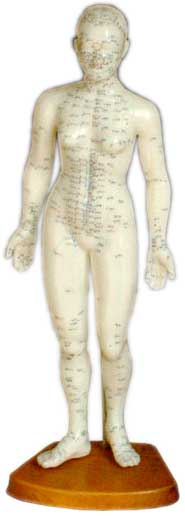 Acupuncture Human Body Model - Female 48cm
