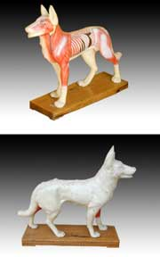 Acupuncture Dog Model -Free shipping